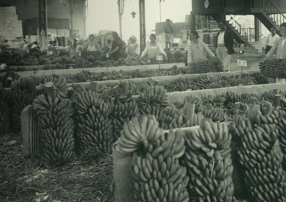 Historia-La-Fast-Agricultura