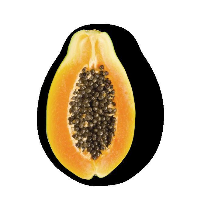 Papaya-FAST