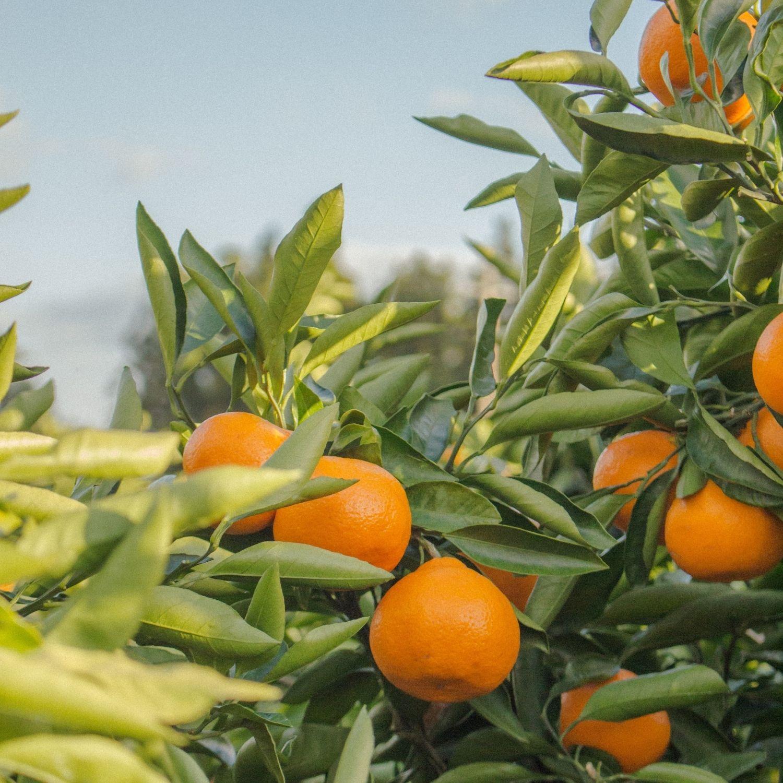 Naranja-Fast